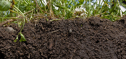 Each farm has its own challenges when it comes to soil