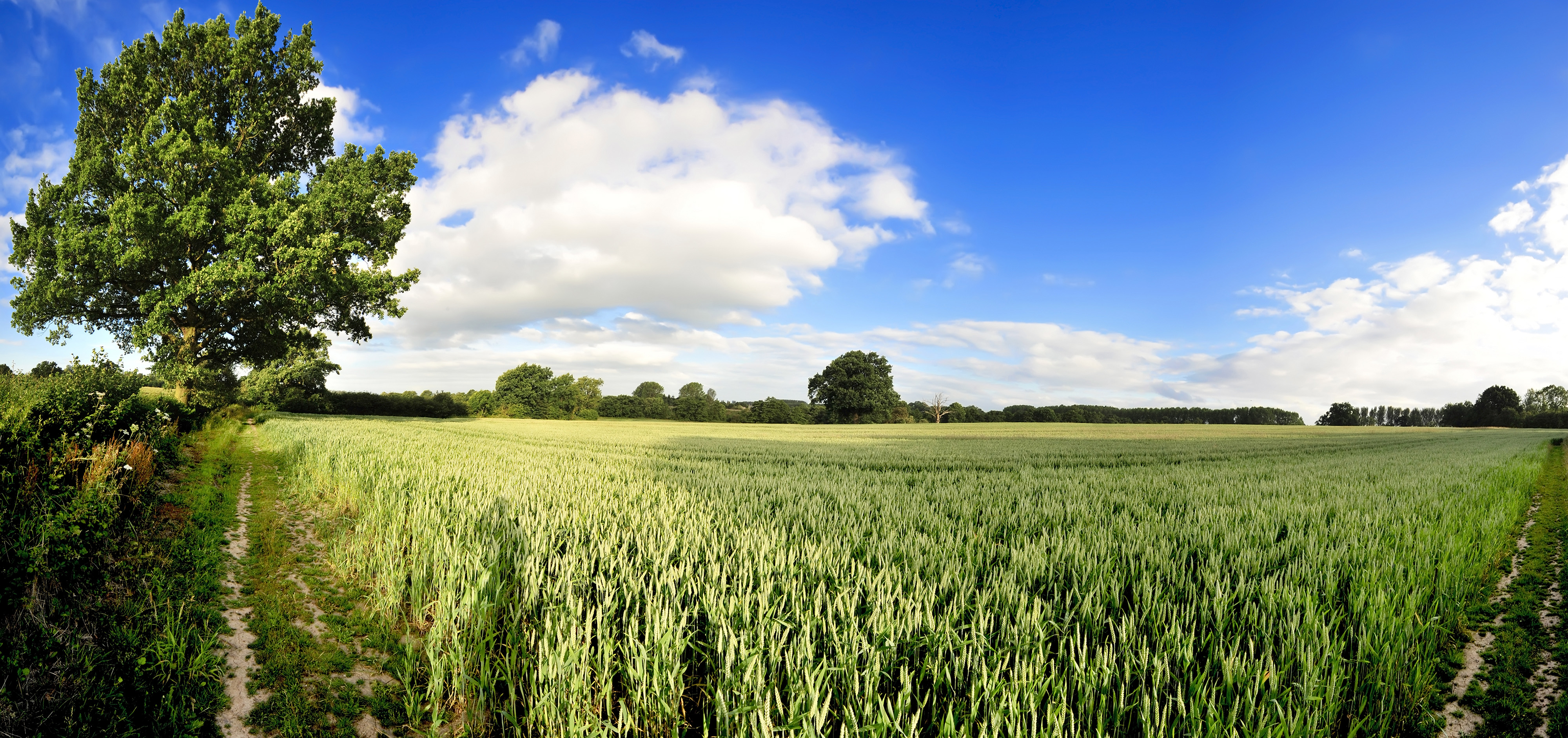 Barley Fields with Granulated Lime