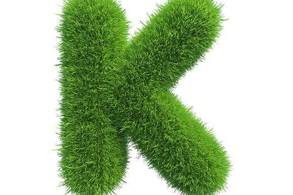 Kilwaughter Lime, Environment
