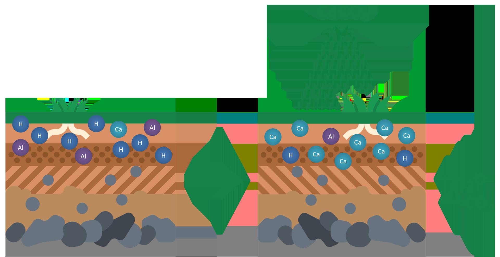 Lime impact diagram