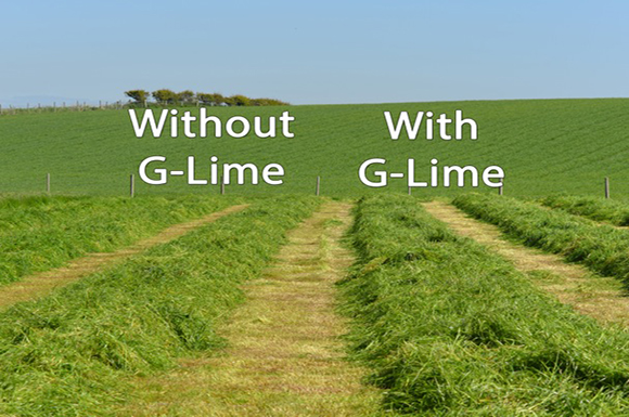 Field of grass with and without G-Lime
